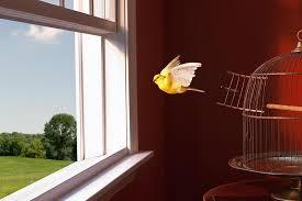 bird escape